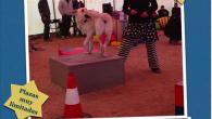 URBAN CIRCUS. Adiestramiento artístico/urbano para perros….. y acompañantes.